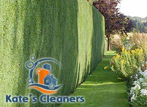 Hedge Maintenance Islington